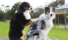 כלבנות טיפולית – כל מה שצריך לדעת